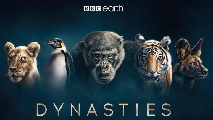 BBC-Dynasties-Feature
